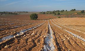 Canvis de cultiu o aprofitaments