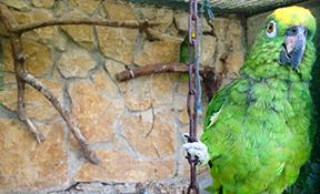 Legalització de nuclis zoològics
