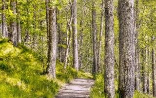 Es convoquen els ajuts forestals 2014