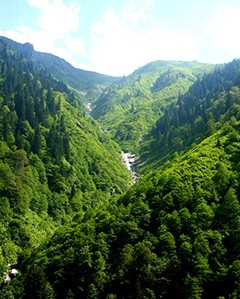 Projectes en boscos públics