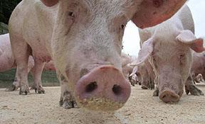 Legalització d'activitats ramaderes i canvis d'orientació