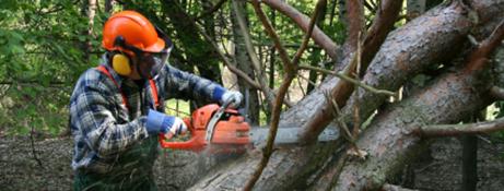 Ajuts forestals