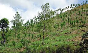 Projectes de recuperació d'àrees degradades i abocadors