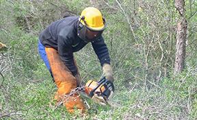 Tramitació d'ajuts i treballs forestals