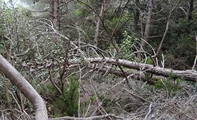Valoració de danys causats per incendis forestals o altres catàstrofes. Valoracions pericials.